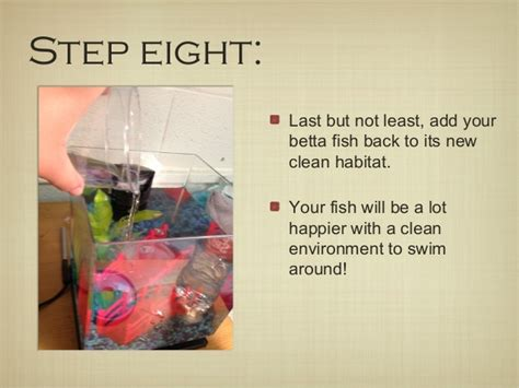 how to keep fish tank water clear how to clean your betta fish tank
