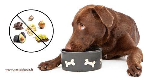 alimenti cani alimenti tossici per cani