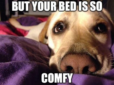 Dog In Bed Meme - is it healthy to have your dog sleep in your bed with you