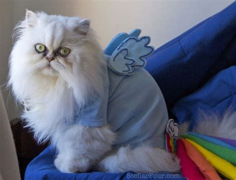 neatorama dragon cat 24 animals that aren t dogs in costumes neatorama