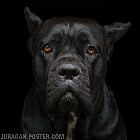 animals jual poster  juragan poster