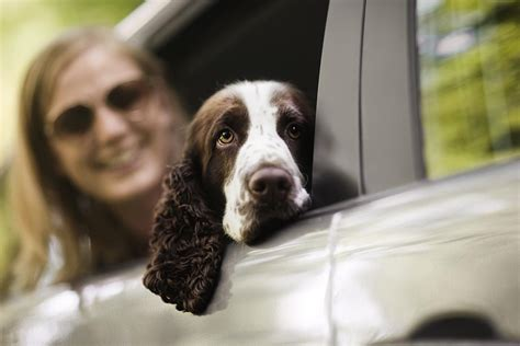car dogs dogs and fear of in cars
