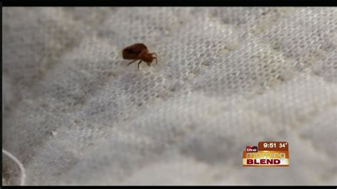 spotting  preventing bed bugs youtube