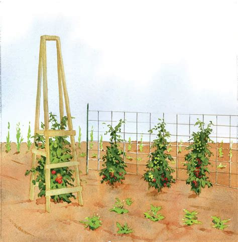 diy how to build wood tomato cages plans free