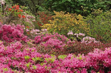 Garden Flowering Shrubs Garden Plants Flowering Places Of Original Cultivation
