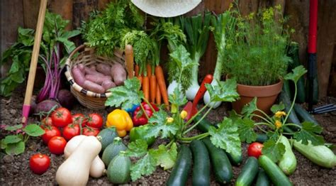 Marion County How Does Your Garden Grow Marion County Cvb Roll Out Vegetable Garden