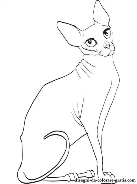 hairless cat coloring page disegno di gatto sphynx da colorare disegni da colorare