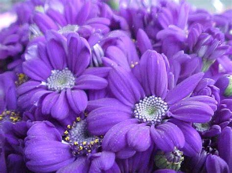 fiori colore viola percorso di crescita acat cervignanese
