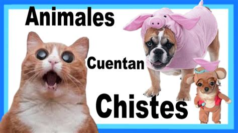 imagenes chistosos de animales chistes graciosos chistes chistosos animales que cuentan