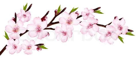Blooming Flower by Spring Background Of A Blossoming Tree Branch With Spring