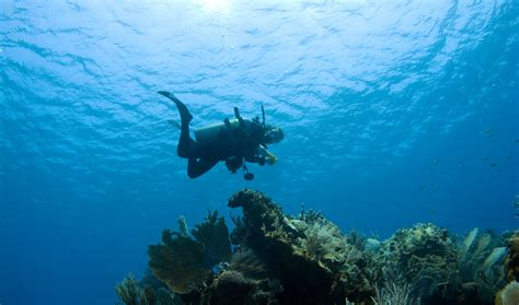 dive resorts grand cayman grand cayman scuba diving trip sense tripcentral ca