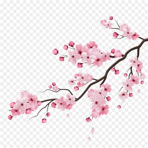 cherry blossom tree drawing png    transparent cherry blossom png