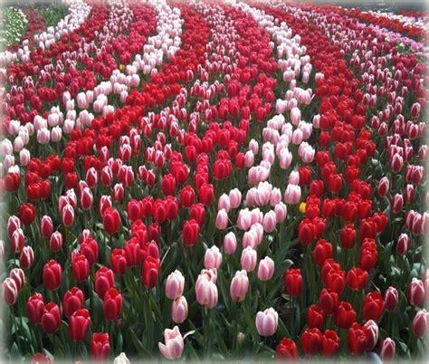 imagenes de flores juntas fotos de jardines con muchas flores imagenes para mama