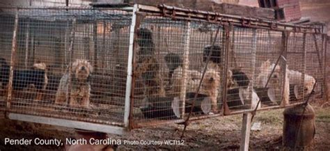 puppy mills in nc the about the american kennel club wolf animal rescue