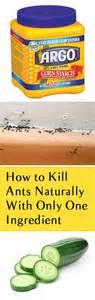 ants gardening hacks and garden pests on