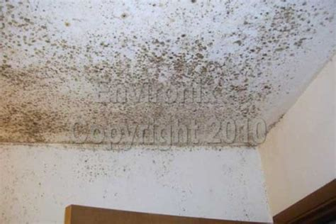 how to clean bathroom mold on ceiling how to clean bathroom mold on ceiling cormansworld com