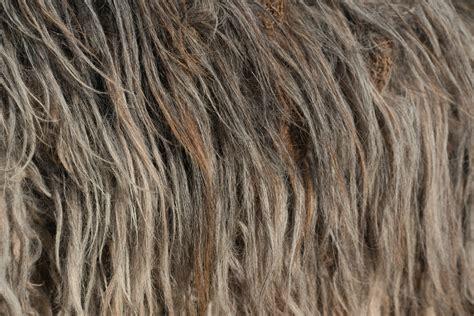 pattern grey hair free images nature structure fur pattern mane wool