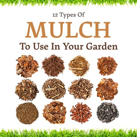 garden mulch types 12 types of mulch that you can use in your garden