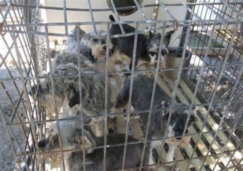 puppy mills in iowa meeting set in northwest iowa to talk about puppy mills