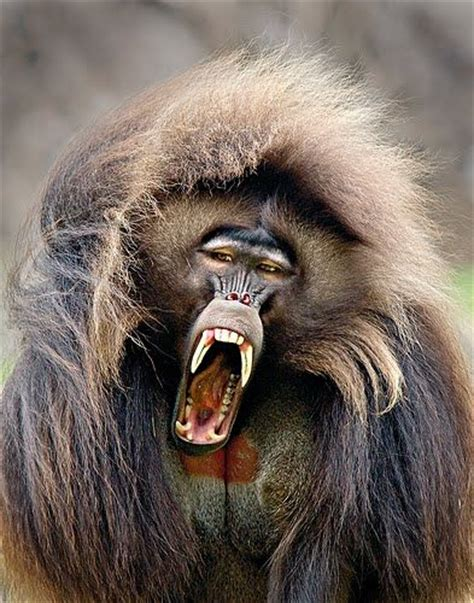 scary ugly goofy creatures images  pinterest exotic animals rare animals