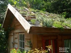 green roof livegreenmarin