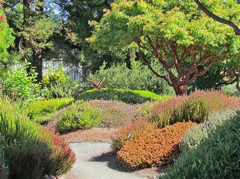 Fort Bragg Botanical Garden Mendocino Coast Botanical Gardens Well Worth A Visit California School Of Garden Design