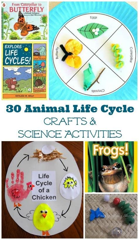 s cycle books 30 cycle activities for animals insects crafts