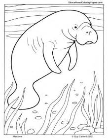 manatee coloring animal coloring pages kids