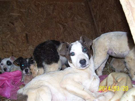 puppies for adoption in alabama picture