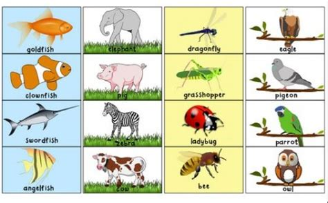 printable animal pictures for sorting free worksheets 187 toddler printable activities free math