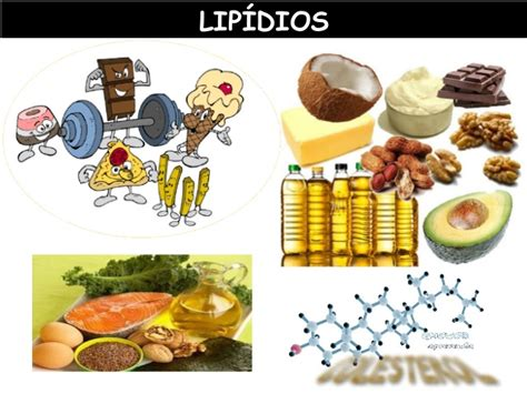 proteinas e lipidios lip 237 dios
