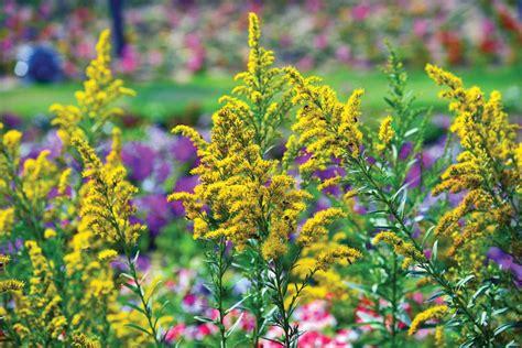 fall blooming flowers top fall blooming flowers for a perennial garden