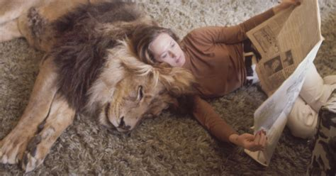 lion film melanie griffith this family lived with a real lion back in 1971 bored panda