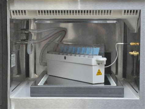 pelco biowave 174 fluorescent and dab labeling for confocal
