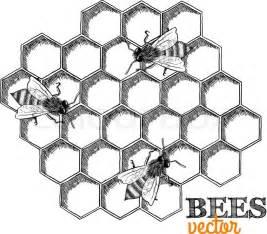 honey bees honeycomb isolated vector illustration stock vector colourbox