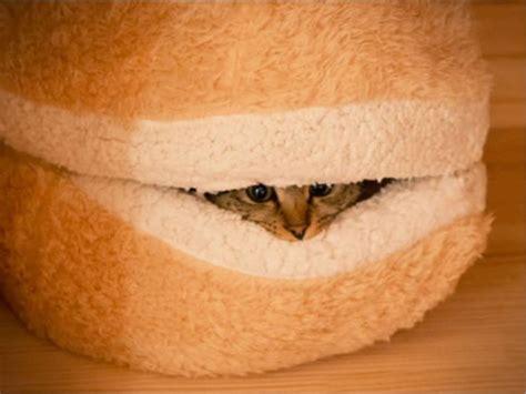 cat burger bed image gallery hamburger cat