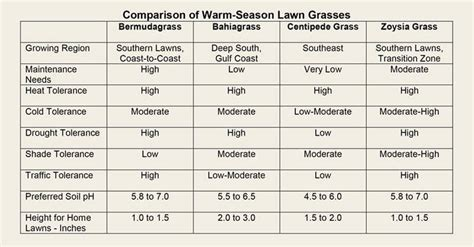 what is the best warm season grass for your lawn