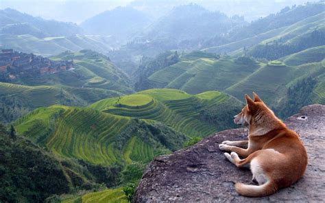 Landscape Pictures With Animals Mountains Landscapes Nature Animals Dogs Scenic Wallpaper