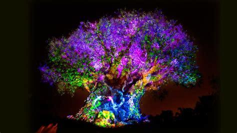 light the tree tree of nighttime awakenings animal kingdom