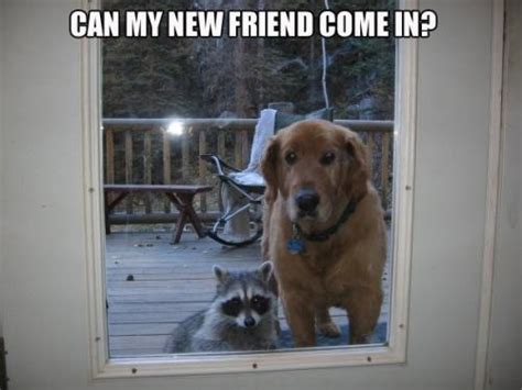 Cute Friend Memes - funny raccoon quotes quotesgram