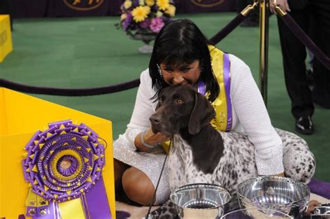 who won westminster show who won best in show at westminster show 2016