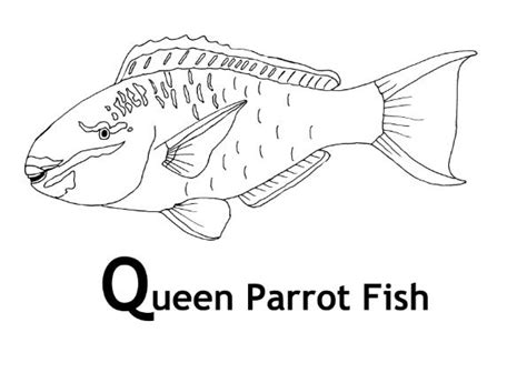 Coloring Pages Of Parrot Fish | parrot fish coloring sheets coloring pages