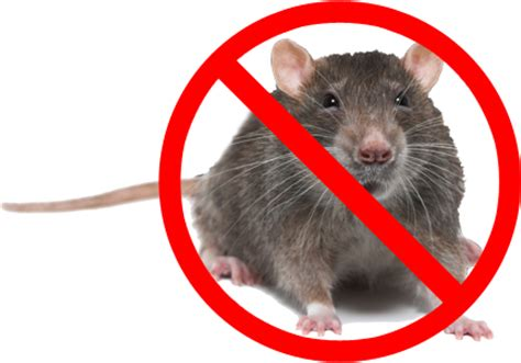 ways    home mouse  pauls aaa pest control