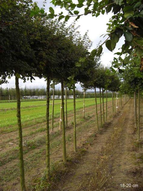 suche günstige einbauküche kugelbaum kaufen g 195 188 nstige lieferung mr
