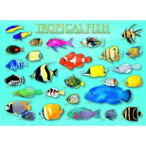 Heye Puzzle 1000 Pieces Shoal Of Fish tropical fish jigsaw puzzle from jigsaw puzzles direct