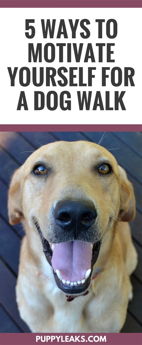 how does it take for puppies to walk 5 ways to motivate yourself for a walk puppy leaks