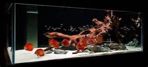 Aquarium Fish Sydney Discus World Aquariums Online Shop Buy Aquarium
