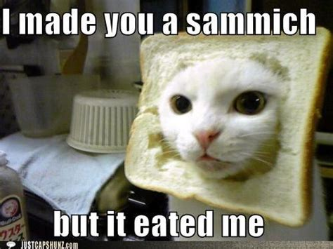 Sammich Meme - cat with bread i made you a sammich but it eated me