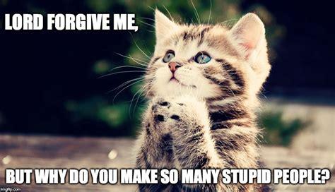 Cute Kittens Memes - kitty s prayer imgflip
