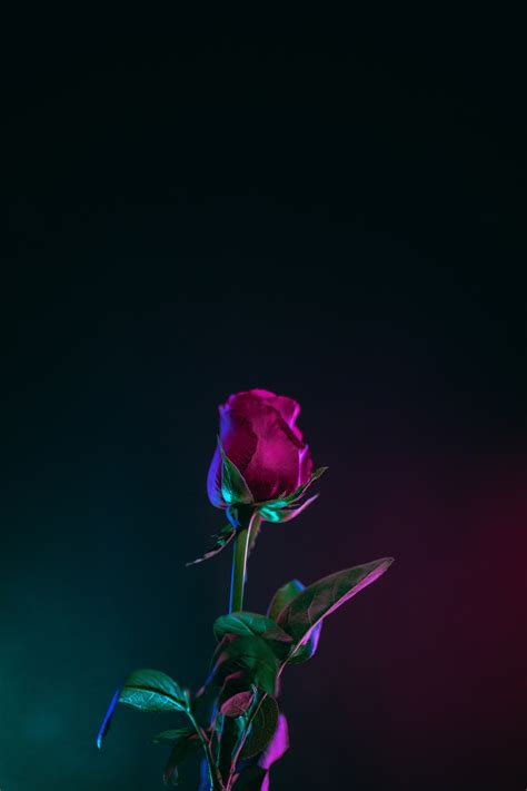 Lock Screen Wallpapers For Android